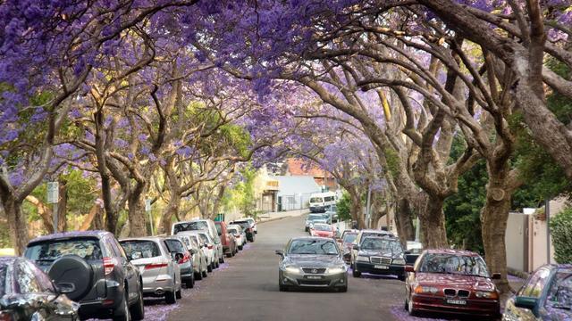 随着春天的到来 澳洲购房者将迎来30年来最佳购房机会